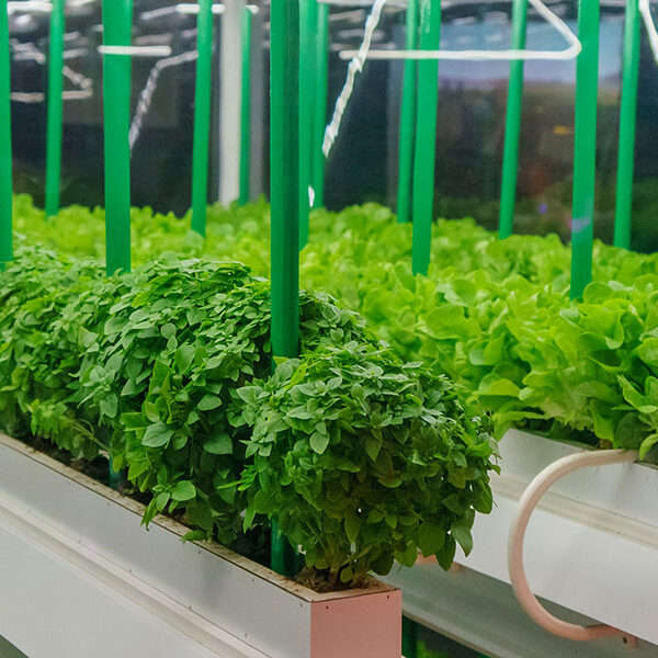 ERI Study on Indoor Agriculture Published to ETCC